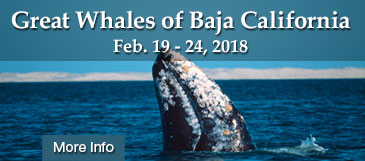 great whales safari 2018